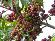 Koffie 4