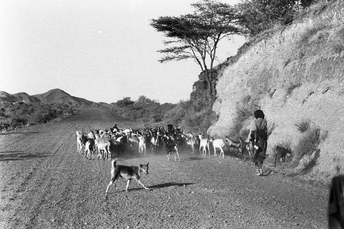 De weg naar Addis